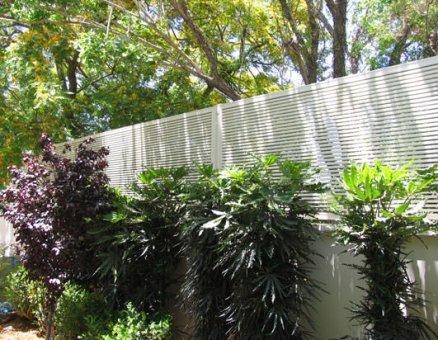גדר לבנה בחצר